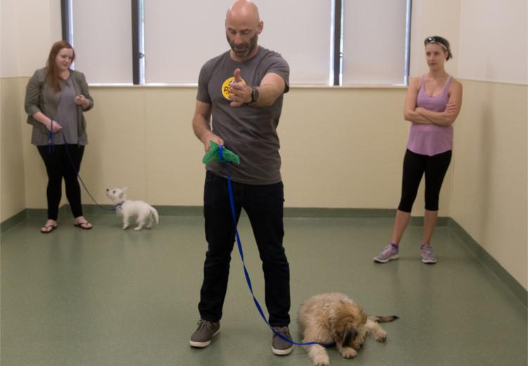 Canine Good Citizen Urban Program