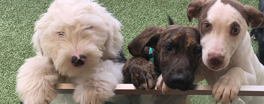 3-hours of Daycare or Puppy Playcare