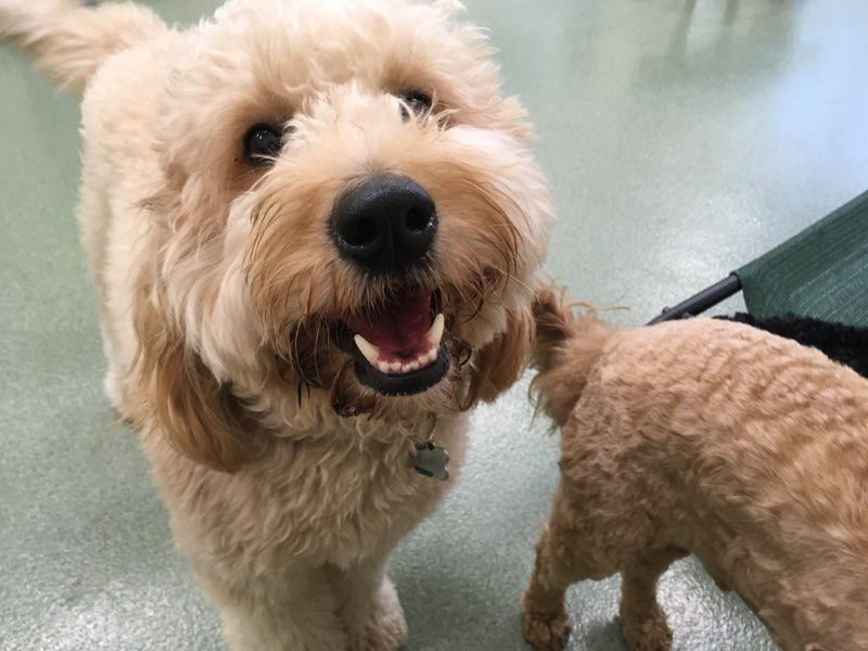 Get a paw up over pandemic stress: 3-plus benefits of professional daycare for your pup and you