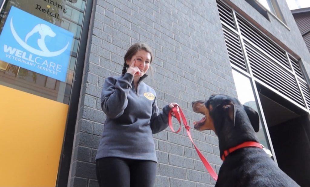 Every Dog Needs Training!