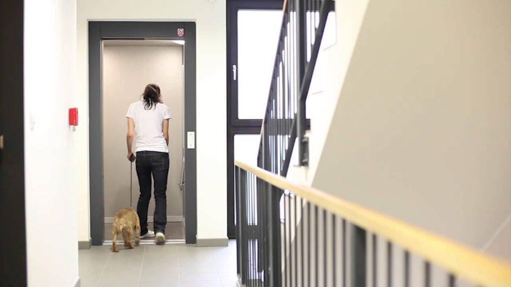 Every Apartment Resident's Nightmare: Chronic Barking!